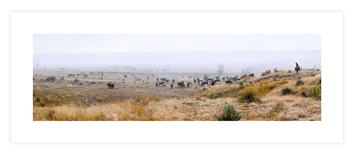 Cattle Drive, Fletcher Ranch