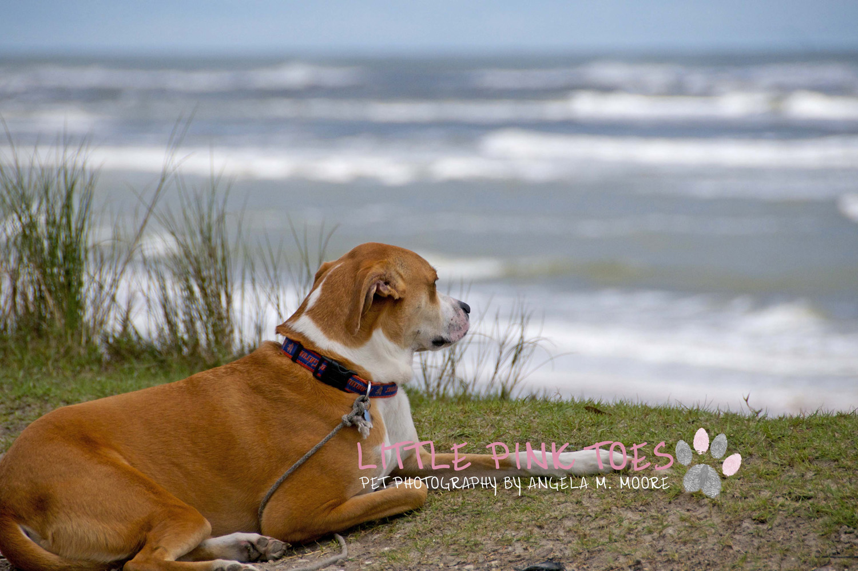 Beach Dog at Mantanzas Pass