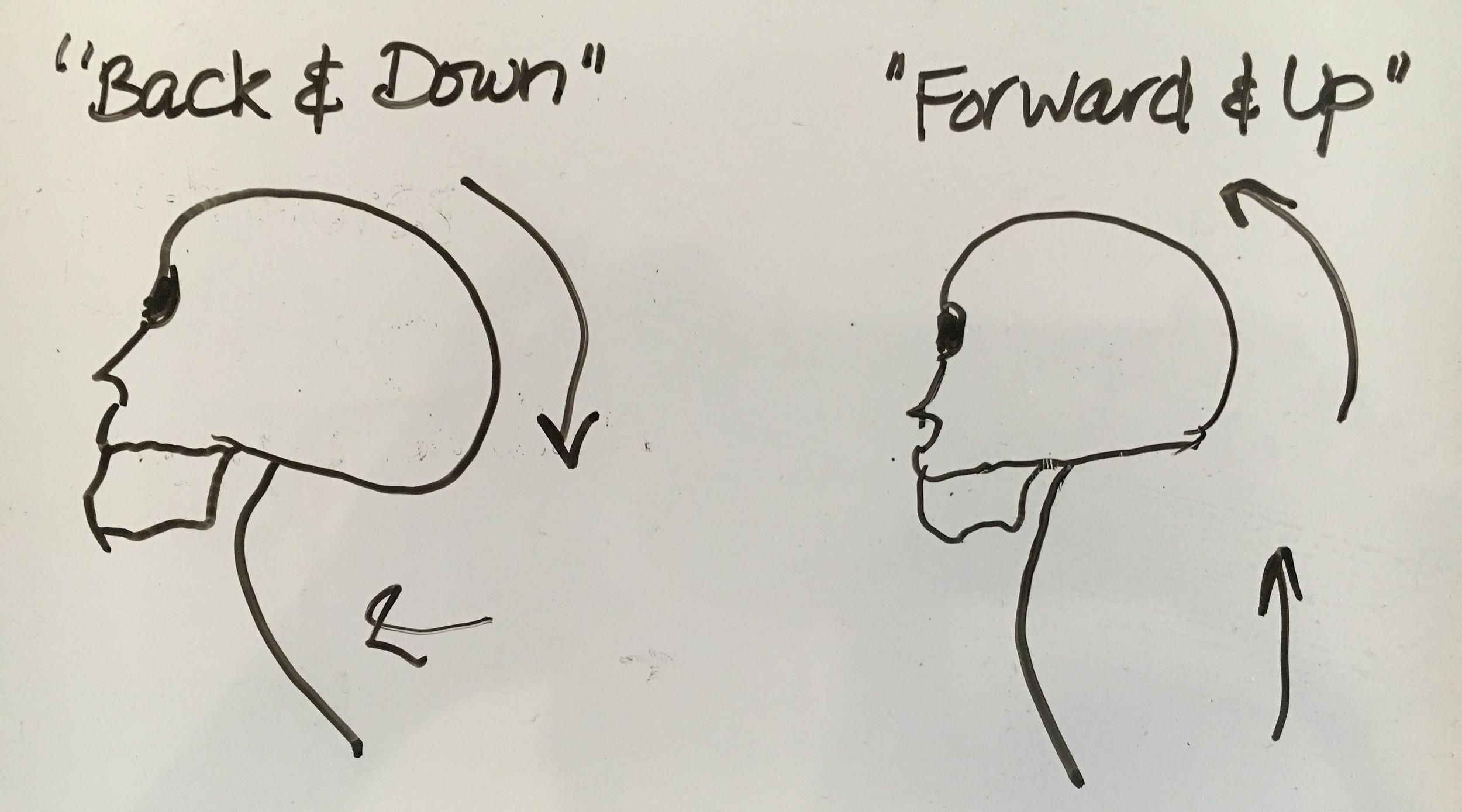 head balance nbl illustrator