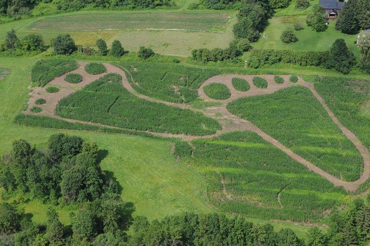 Our Farm Corn Maze