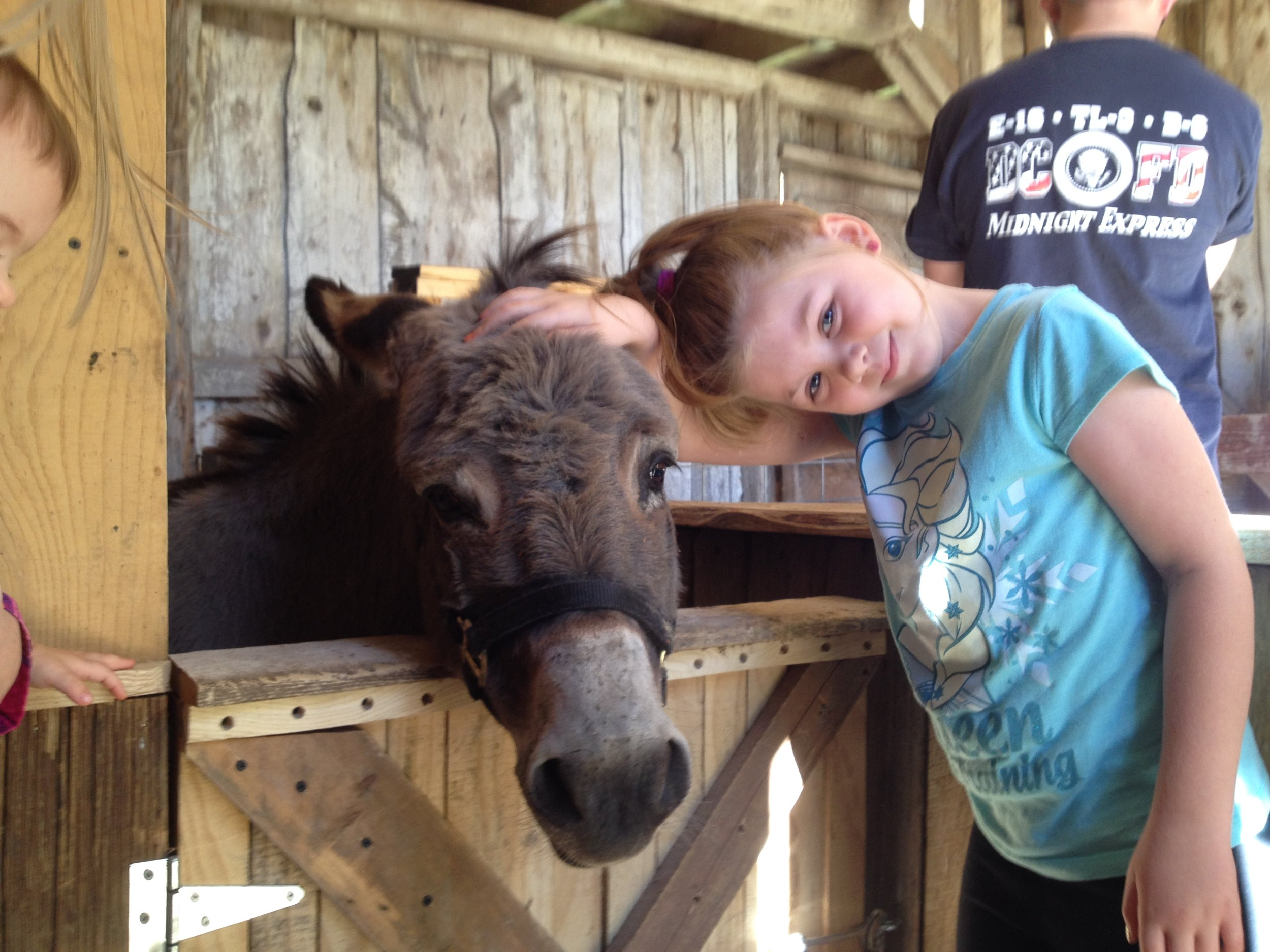 Petting Zoo - We have goats, sheep, rabbits, piglets, a mini horse (Trixie) and a donkey (Sherman). All of these friendly animals are eager to meet you. Feel free to go right inside the petting zoo where you can make friends up close.
