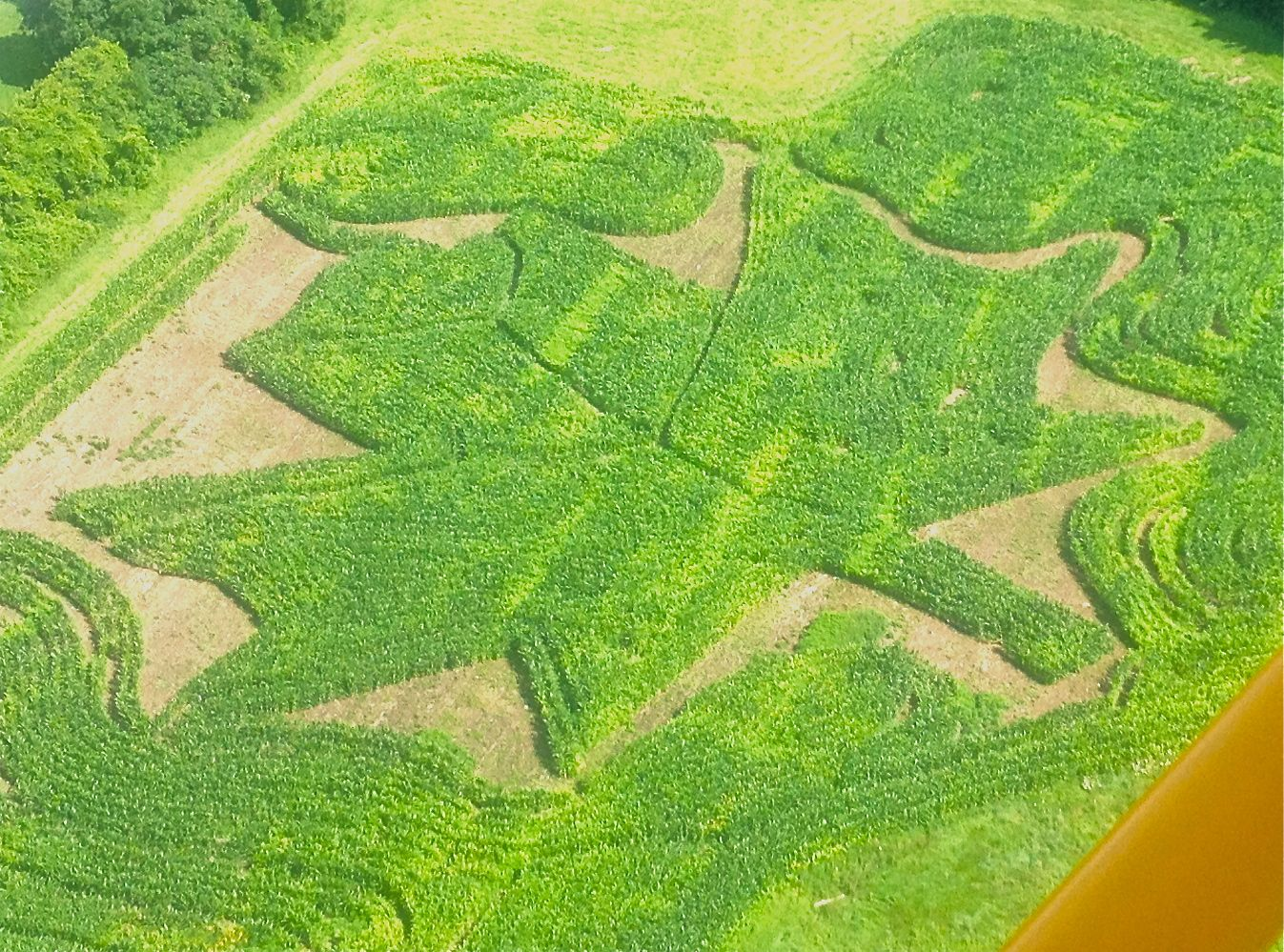 Maple leaf maze.jpg