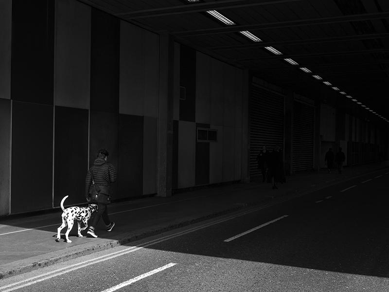 spotty dog.jpg