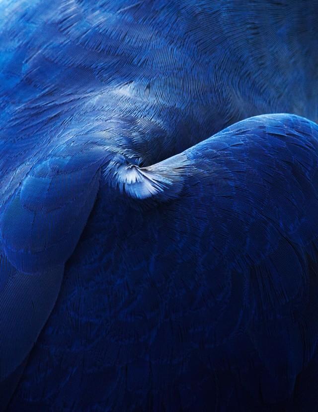 thomaslohr_Birds_00-640x828.jpg