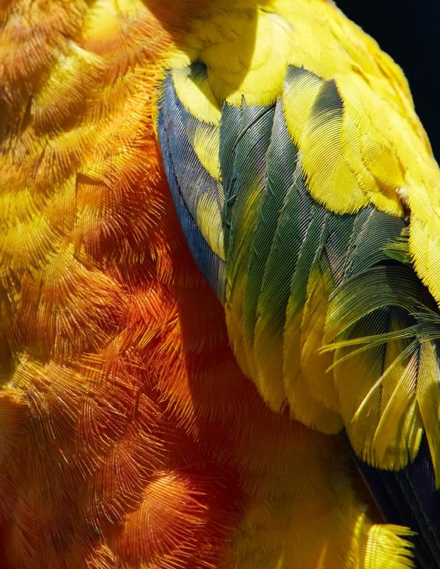 thomaslohr_Birds_2-640x828.jpg