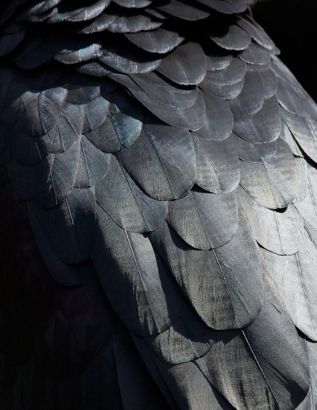 thomaslohr_Birds_16-640x828.jpg