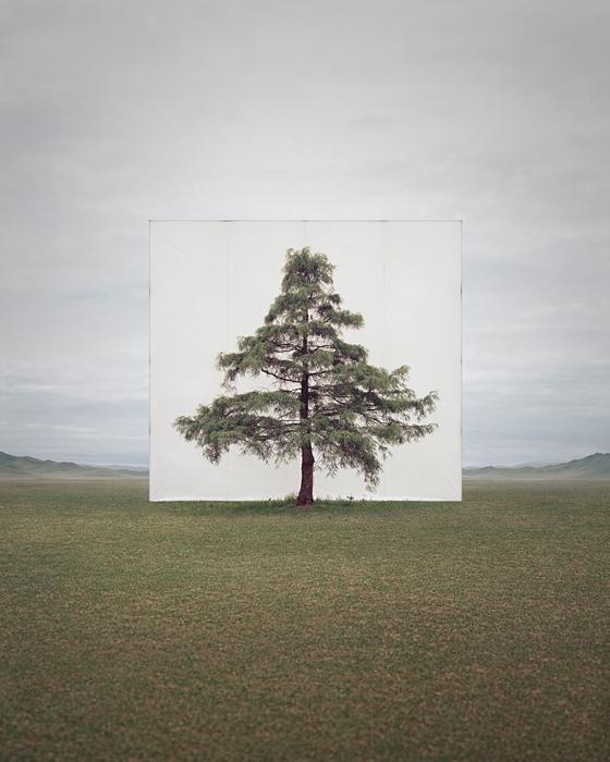 large-myoung_ho_lee-tree_6-2014.jpg