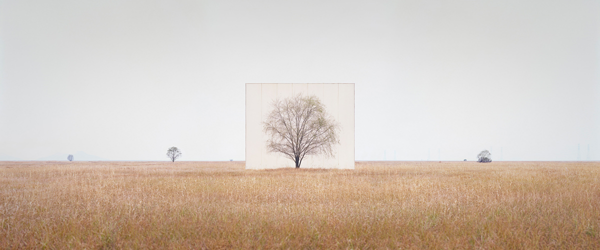 large-myoung_ho_lee-tree_3-2013.jpg
