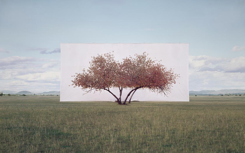 large-myoung_ho_lee-tree_2-2011.jpg
