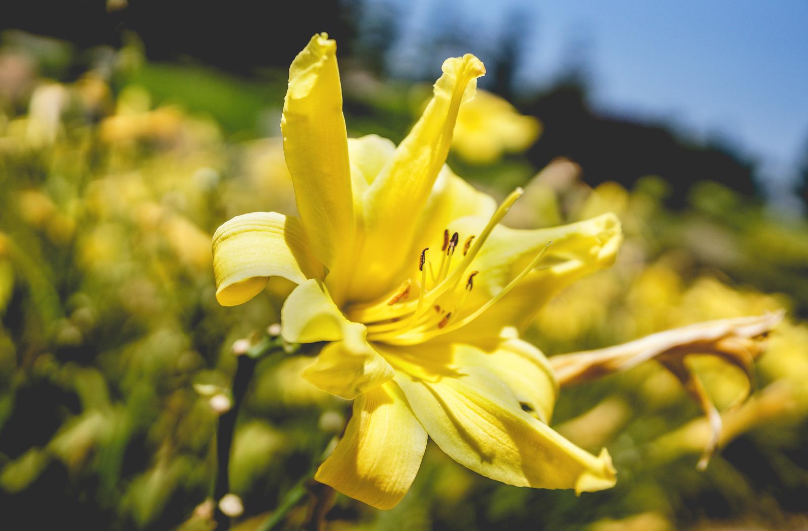 Flower1N.jpg
