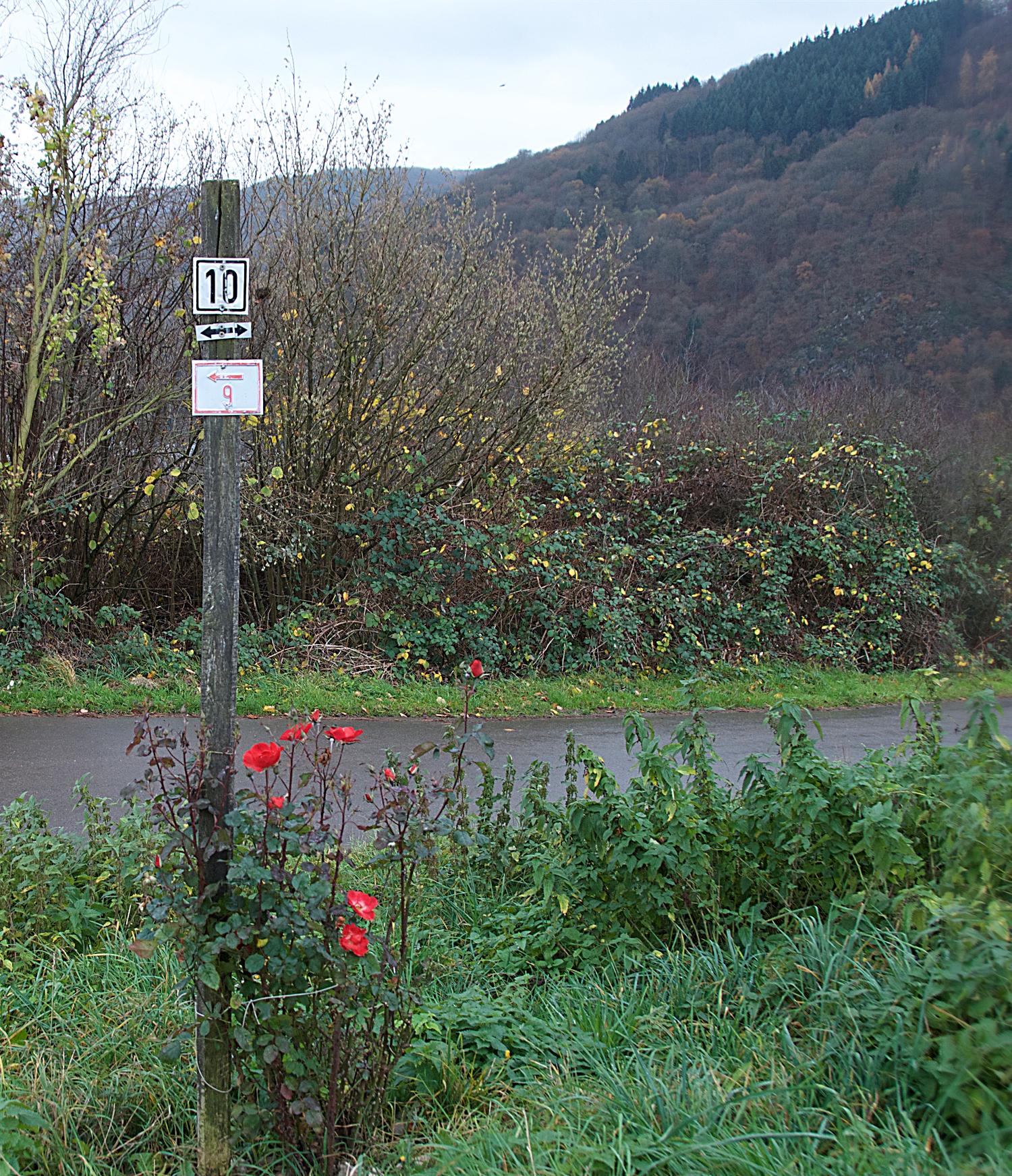 hiking-traben-trarbach.png
