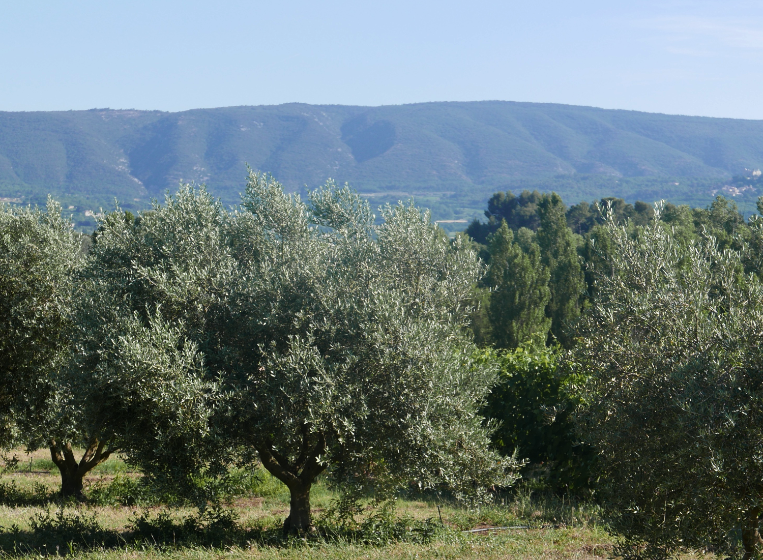 provence-south-of-france.png