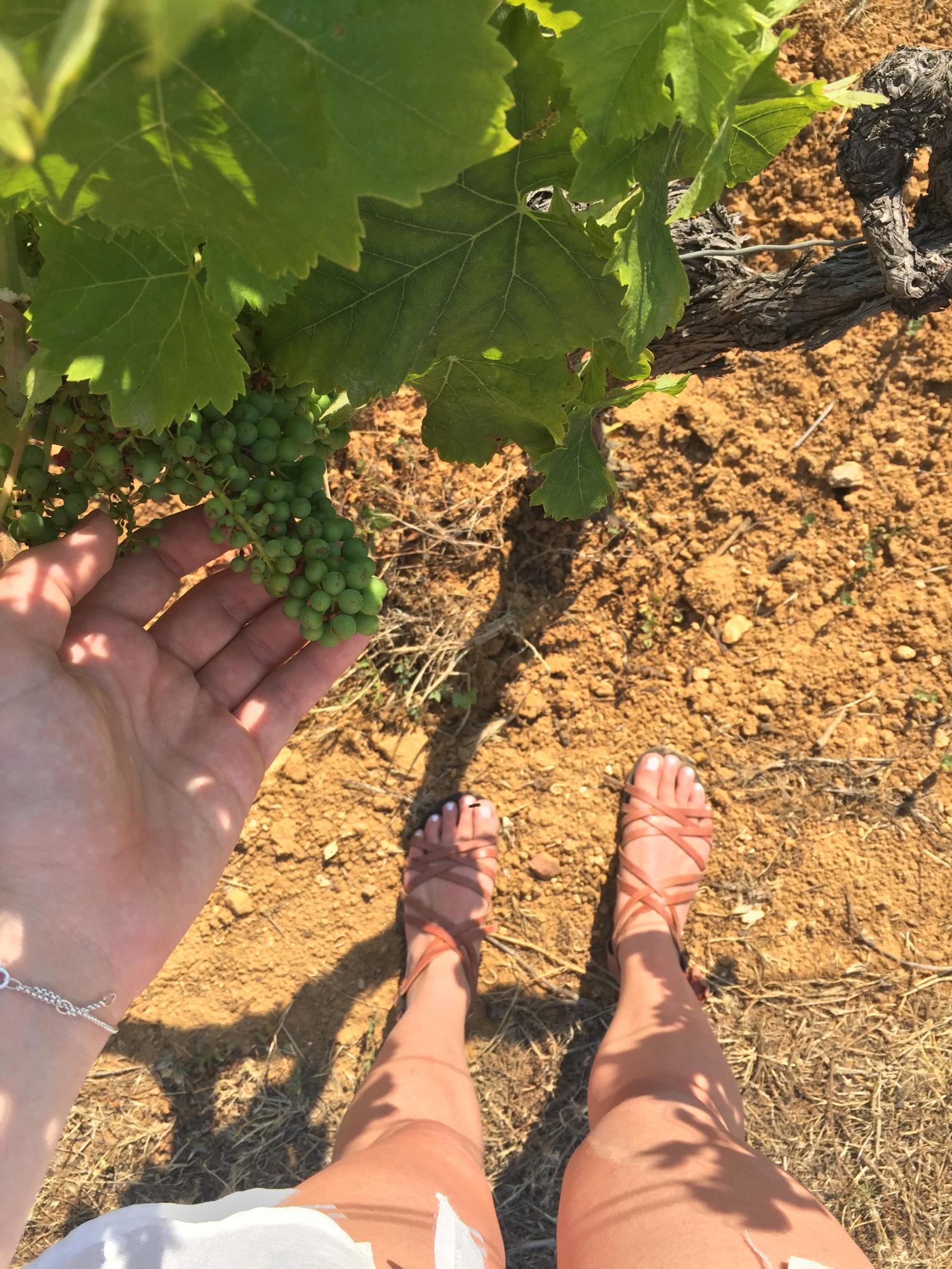 vineyard-south-of-france.png