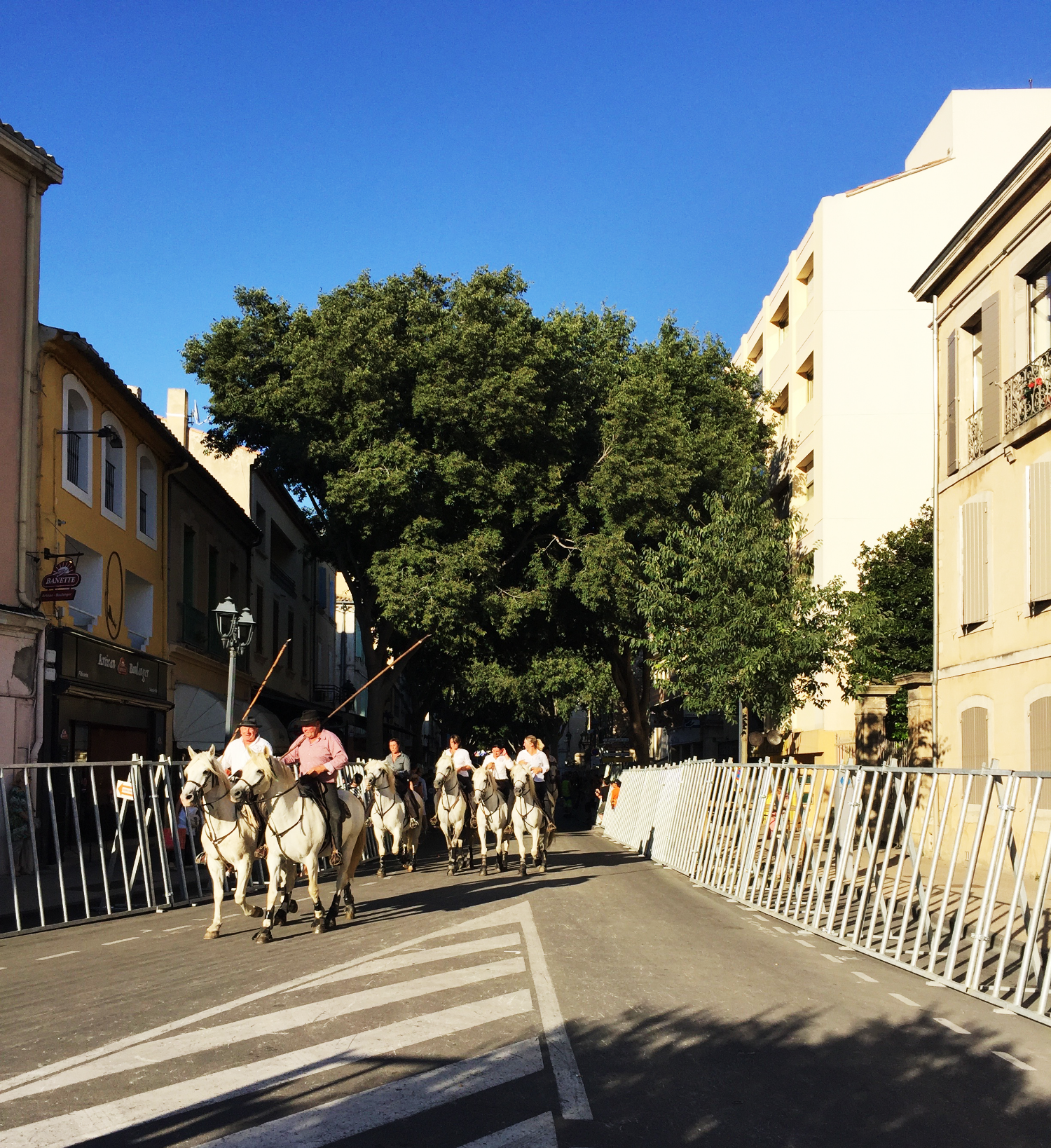 running-of-bulls-south-of-france.png