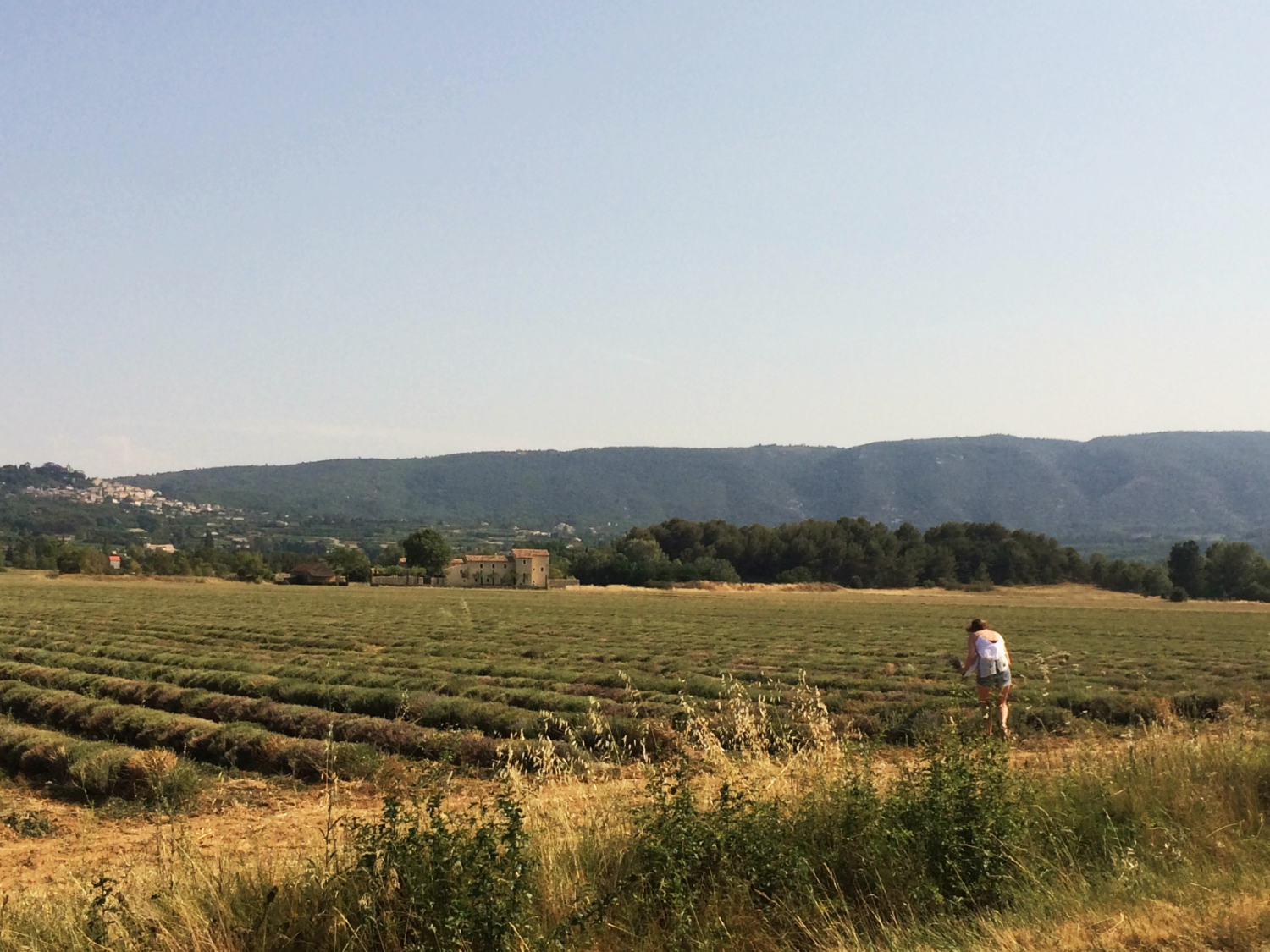 lavender-fields-south-of-france.png