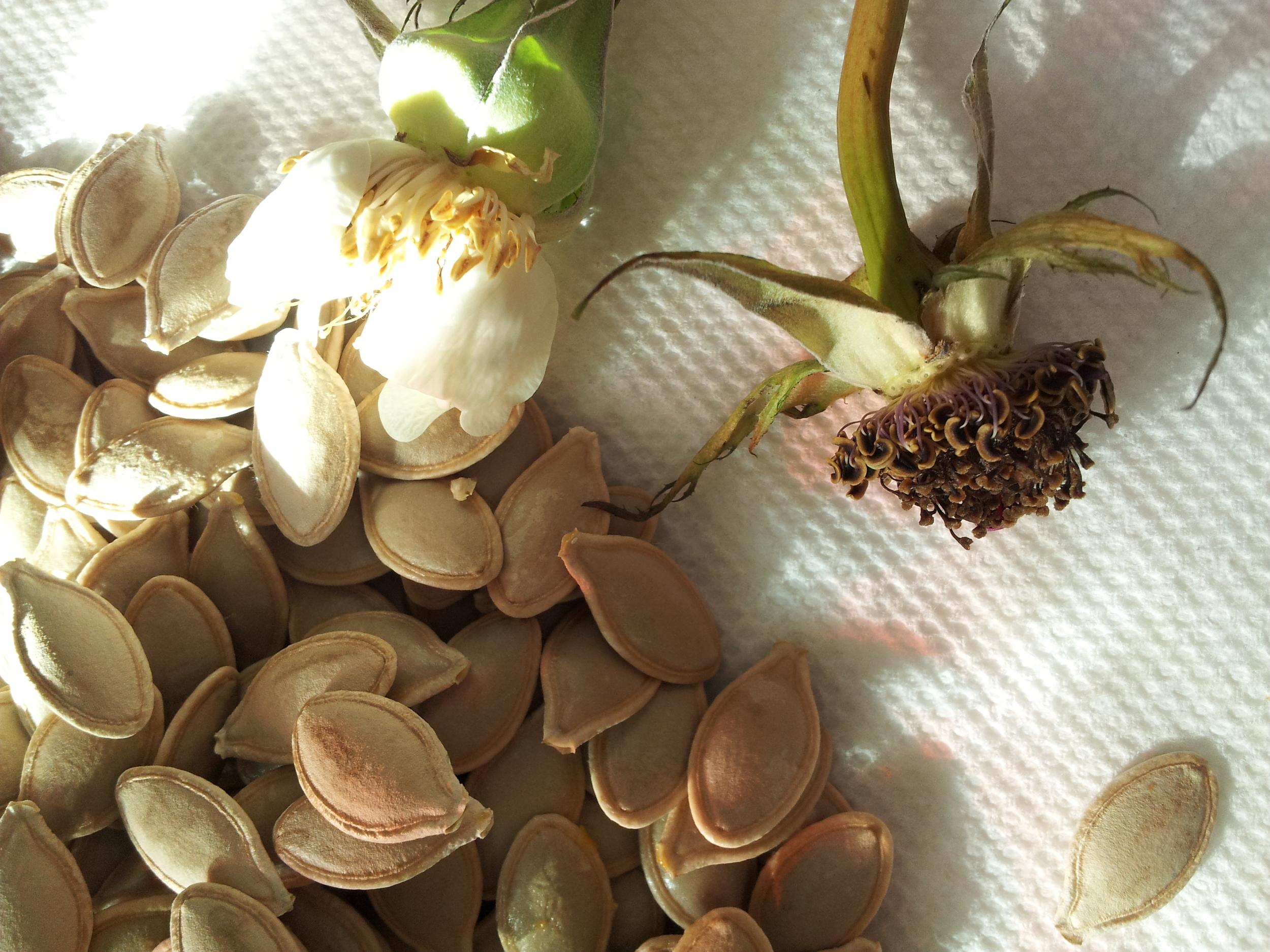 Organic And Sustainability Hanabana