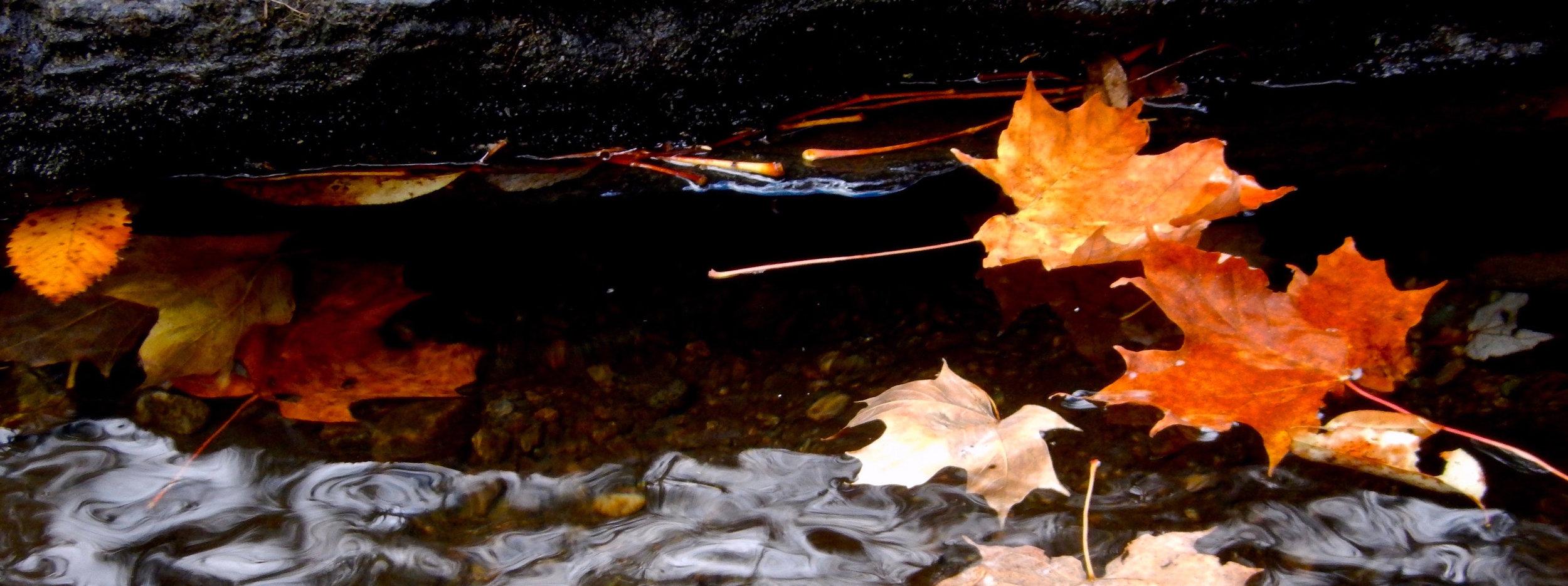 vermont-leaves.jpg