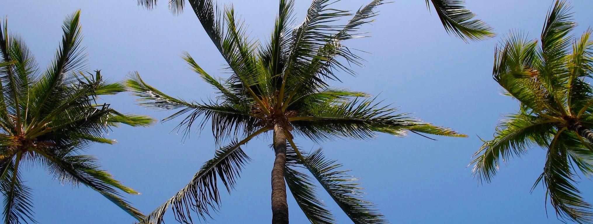 hawaiian-palm-trees.jpg