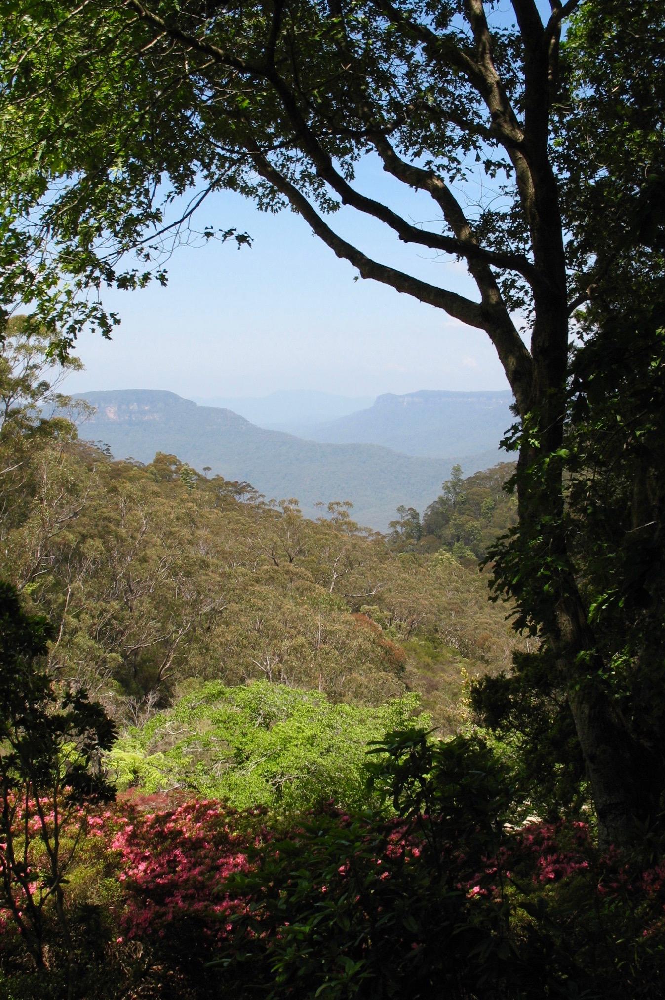 Blue Mountains-Leura Gardens 2.jpg