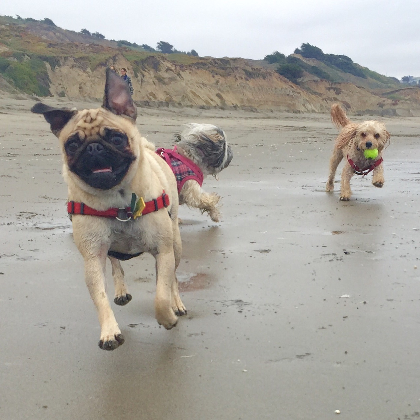 A semi-private walk or small group excursion is a chance for your dog to socialize and interact with other dog friends.
