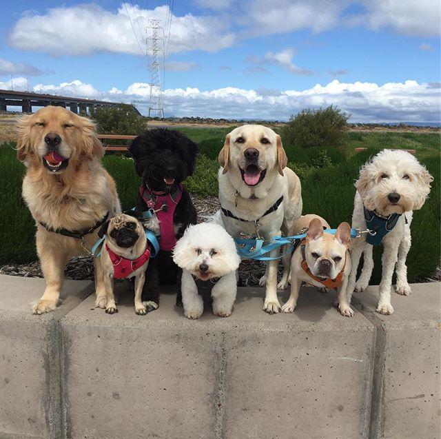 🌬it's just a little windy 🤣 --------------------------------------- 🐶#pointfetchmatch #instagramdogs 🐾#dogstagram #iflmdog #ilovemydog #dogwalker 🎾#adventuresindogwalking  #showcasing_pets #dogwalks #dogsareawesome #instadog #pets #sfprodog #baymeadowslife #dogsofinstagram #buzzfeedanimals #puppia #barkhappy #barkbox