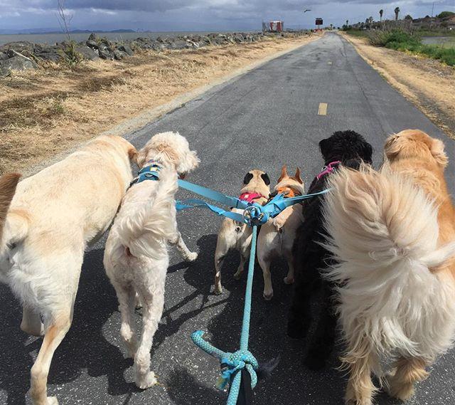 And the journey continues... --------------------------------------- 🐶#pointfetchmatch #instagramdogs 🐾#dogstagram #iflmdog #ilovemydog #dogwalker 🎾#adventuresindogwalking  #showcasing_pets #dogwalks #dogsareawesome #instadog #pets #sfprodog #baymeadowslife #dogsofinstagram #buzzfeedanimals #puppia #barkhappy #barkbox