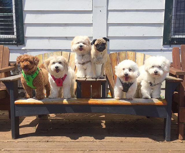 Littles Union Meeting 🤝🤝🤝 --------------------------------------- 🐶#pointfetchmatch #instagramdogs 🐾#dogstagram #iflmdog #ilovemydog #dogwalker 🎾#adventuresindogwalking  #showcasing_pets #dogwalks #dogsareawesome #instadog #pets #sfprodog #baymeadowslife #dogsofinstagram #buzzfeedanimals #puppia #barkhappy #barkbox