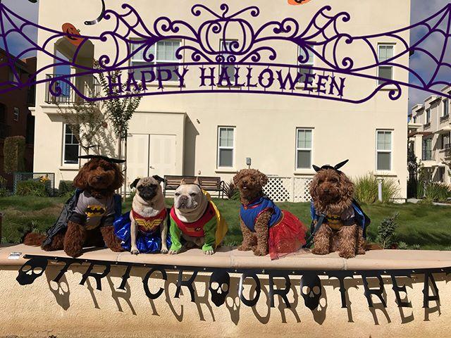 Happy Halloween 🎃  From the PFM Monday Crew --------------------------------------- 🐶#pointfetchmatch #instagramdogs 🐾#dogstagram #iflmdog #ilovemydog #dogwalker 🎾#adventuresindogwalking  #showcasing_pets #dogwalks #dogsareawesome #instadog #pets #sfprodog #baymeadowslife #dogsofinstagram #buzzfeedanimals #puppia #barkhappy #barkbox