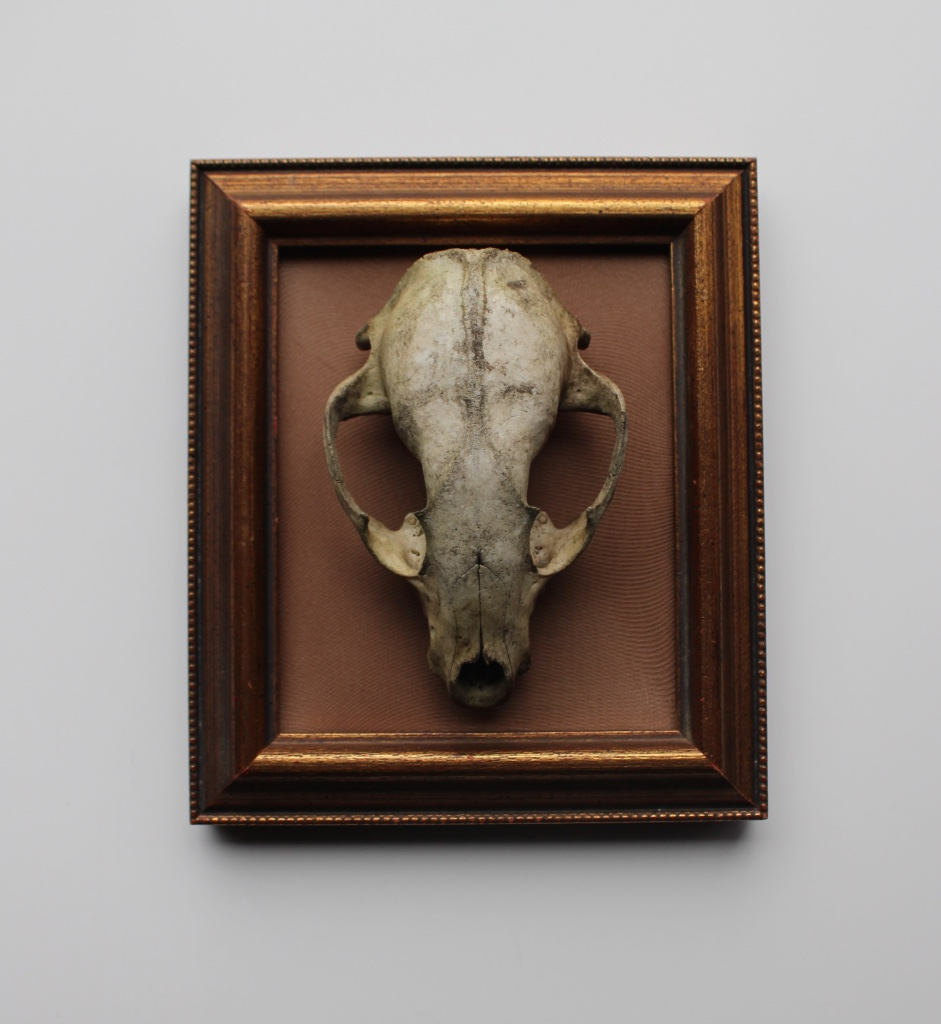 small framed skull by way of one Collins