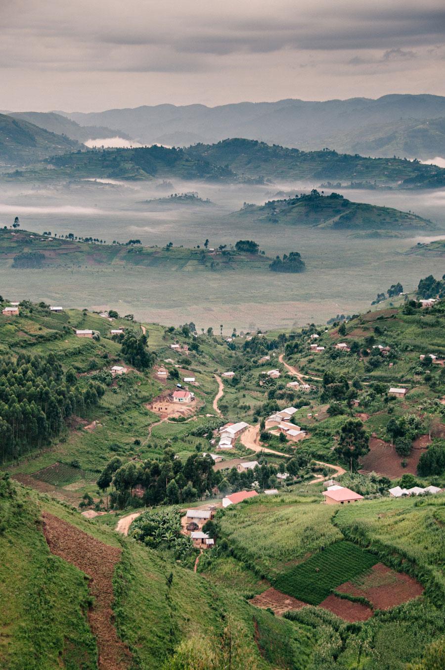 mountain-gorillas-uganda-001.jpg