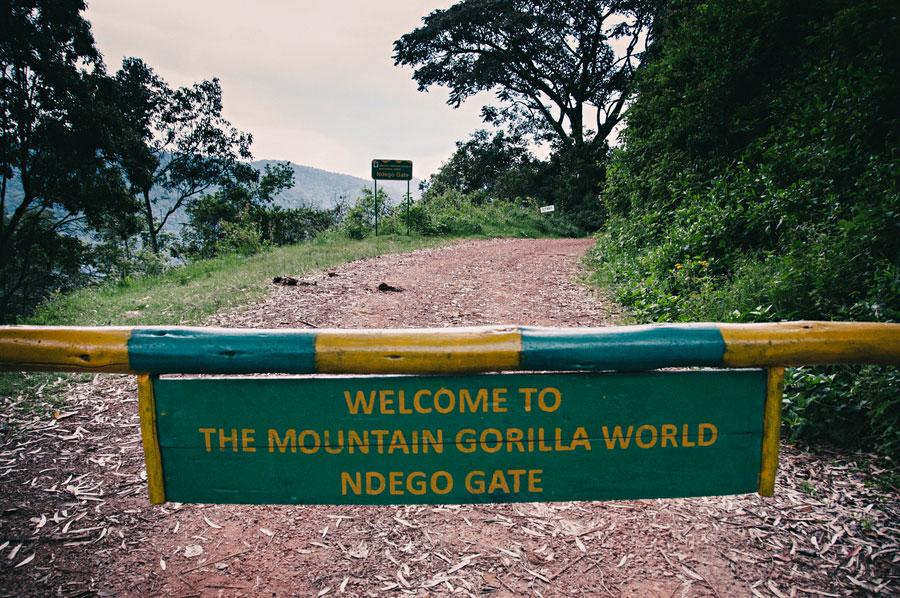 mountain-gorillas-uganda-004.jpg