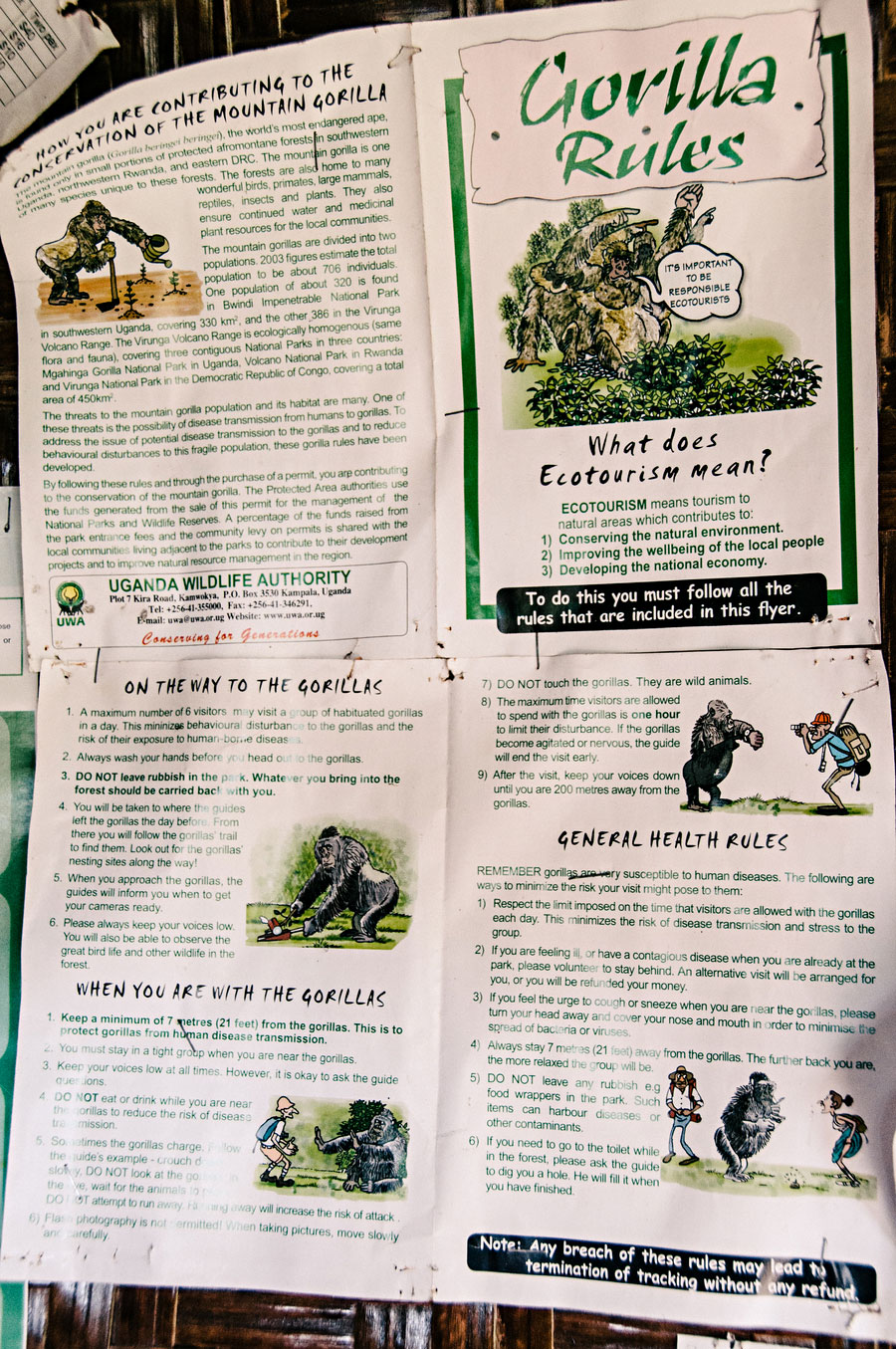 mountain-gorillas-uganda-005.jpg