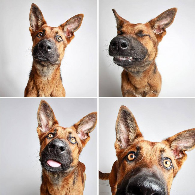 What happens when you put dogs in a photo booth!