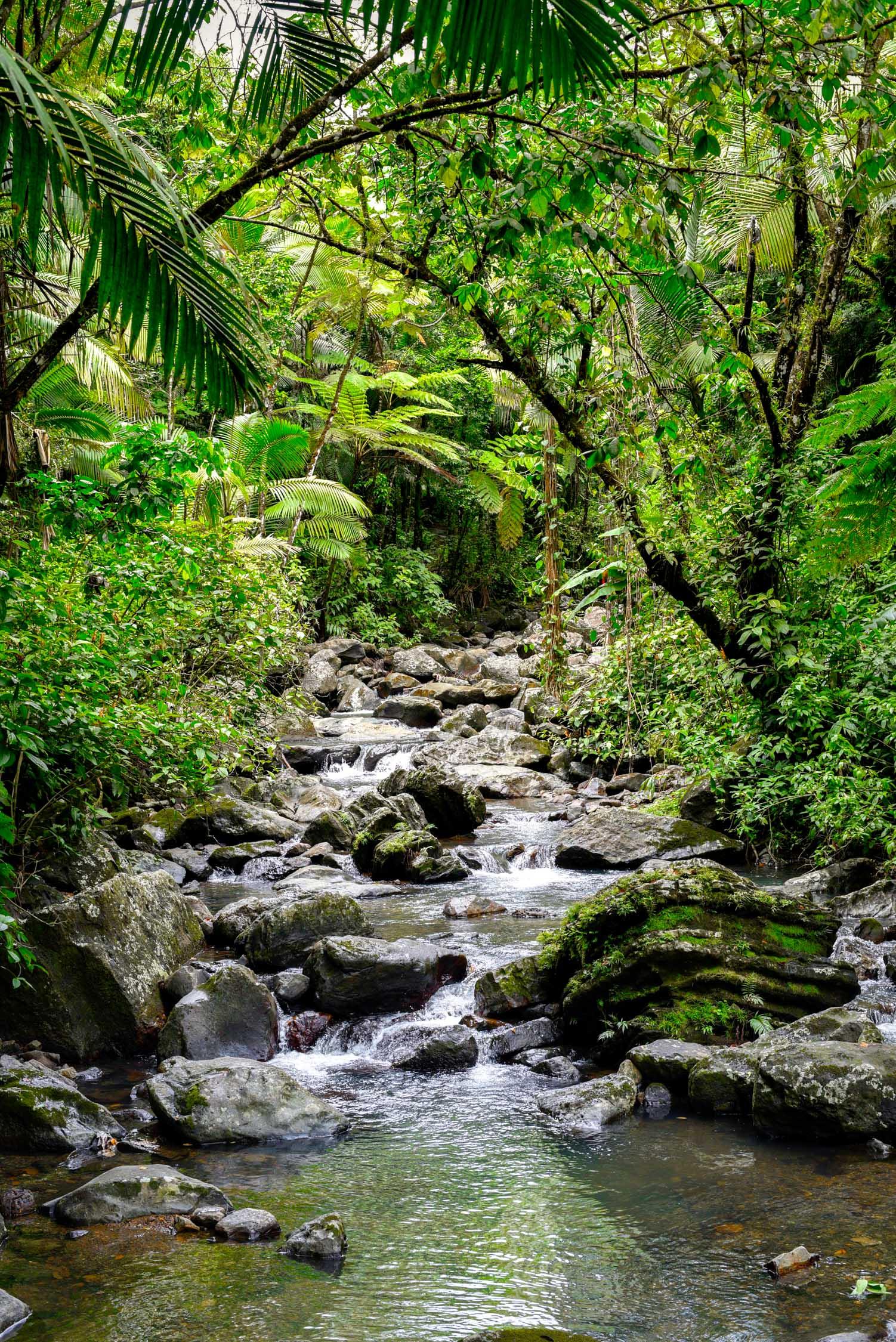 Climbing the falls at El Yunque Rainforest in Puerto Rico