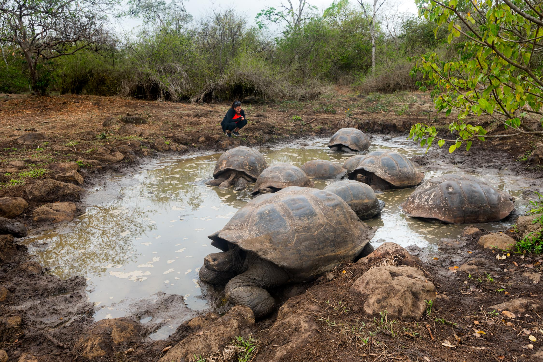 If you were really quiet, you can hear the Giant tortises make faint sounds almost like a sneeze
