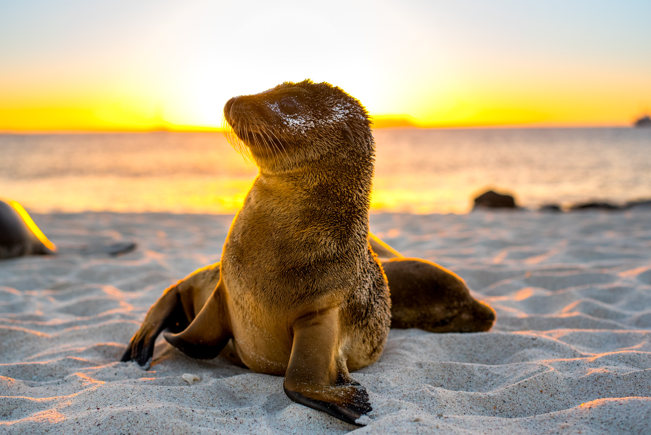 Finding a cruise with plenty of excursions with opportunities to see as much wildlife as possible, was our top priority! The Evolution, part of Quasar Expeditions gave us this.