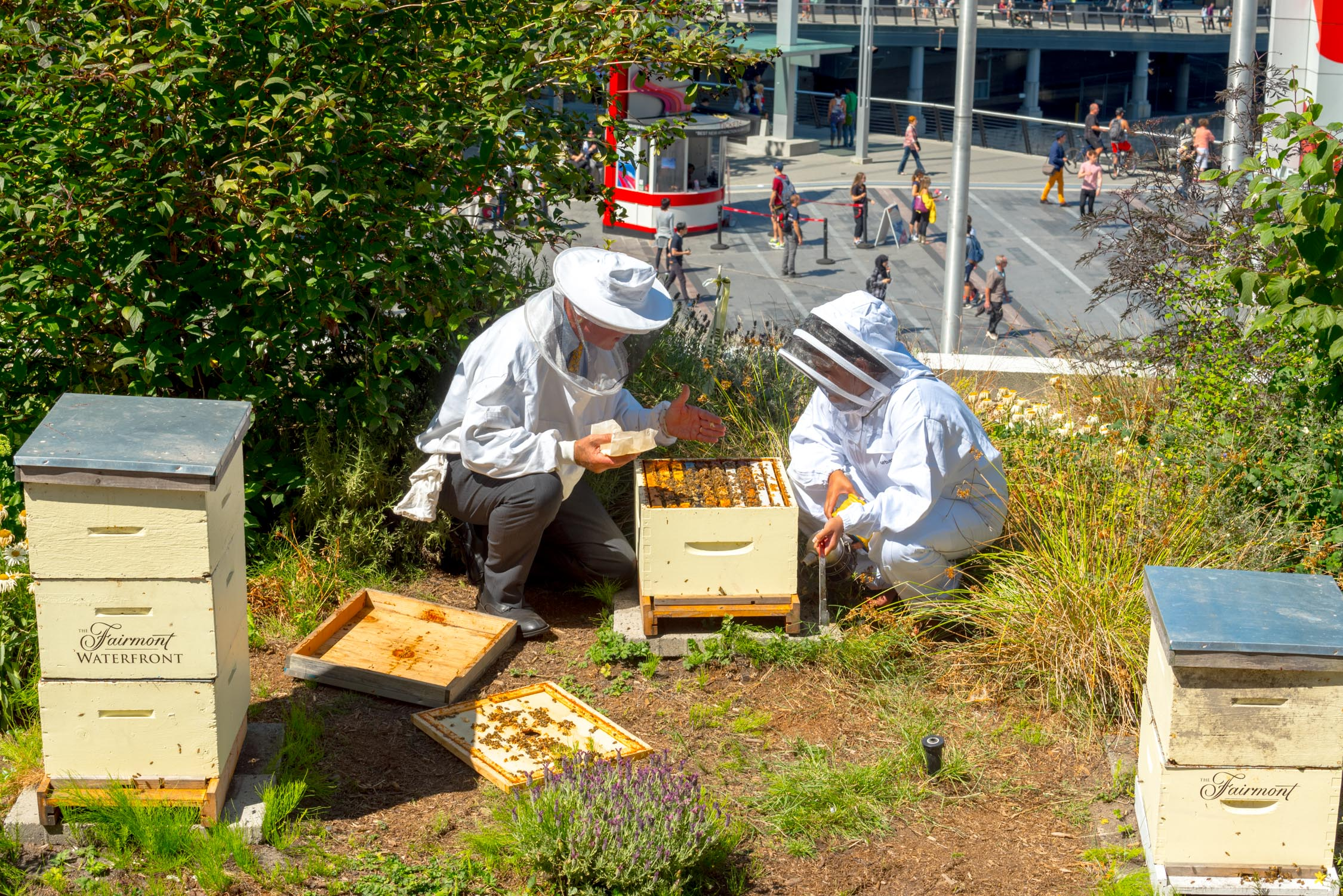 """Working with the """"Bee Butler"""" at the Fairmont Waterfront, Vancouver"""