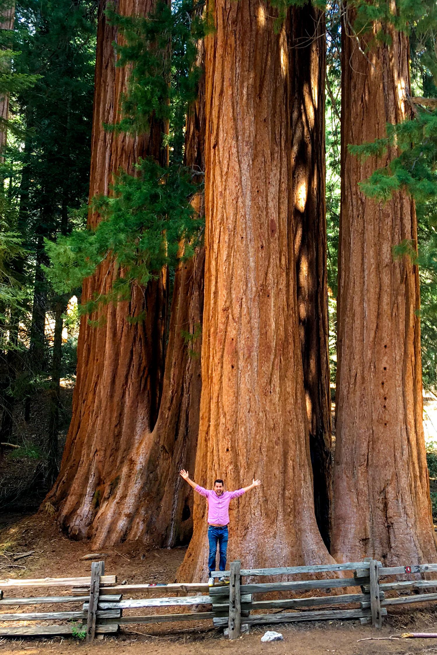 The Sequoia in Desert