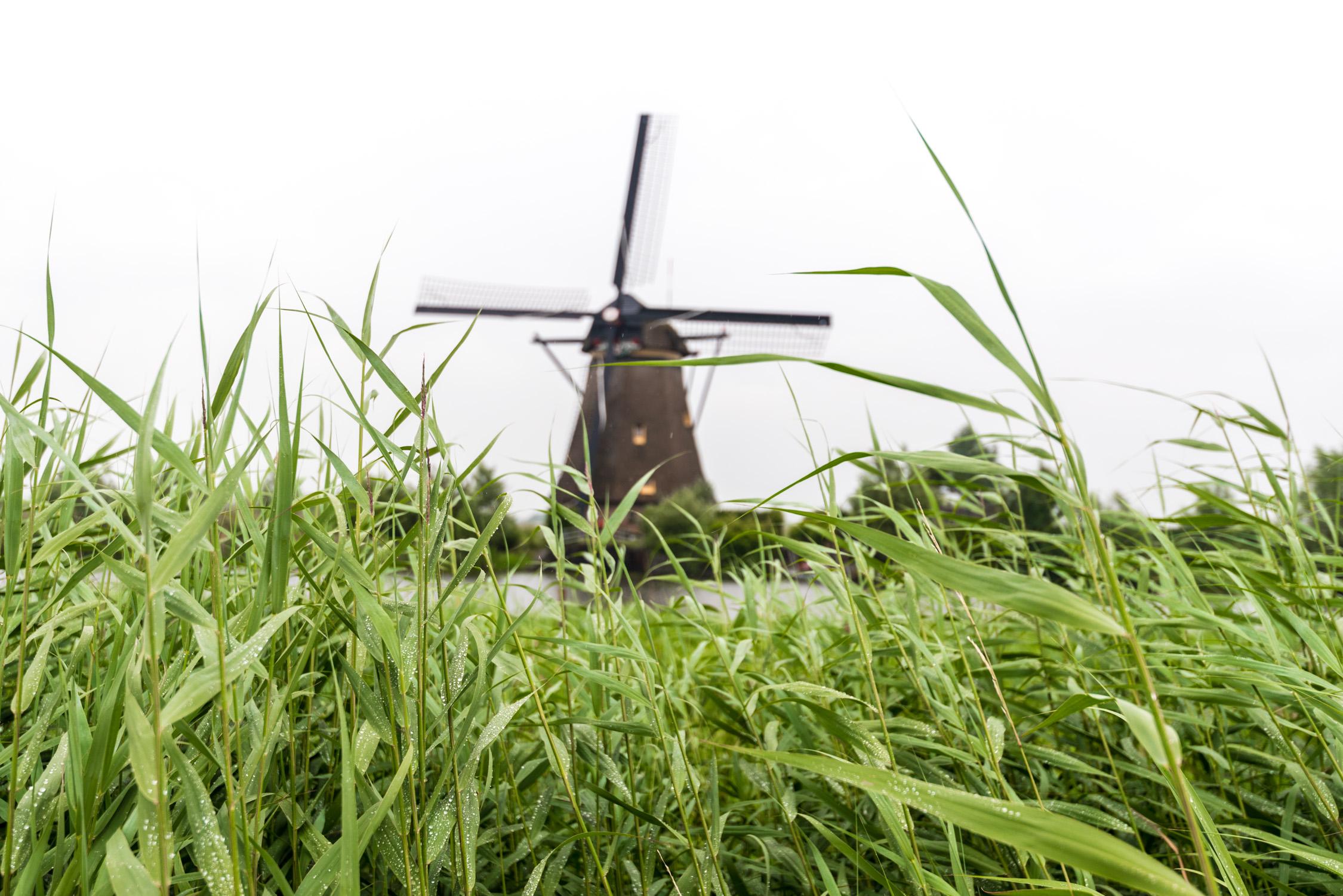 Kinderdijk-11-20140401.jpg