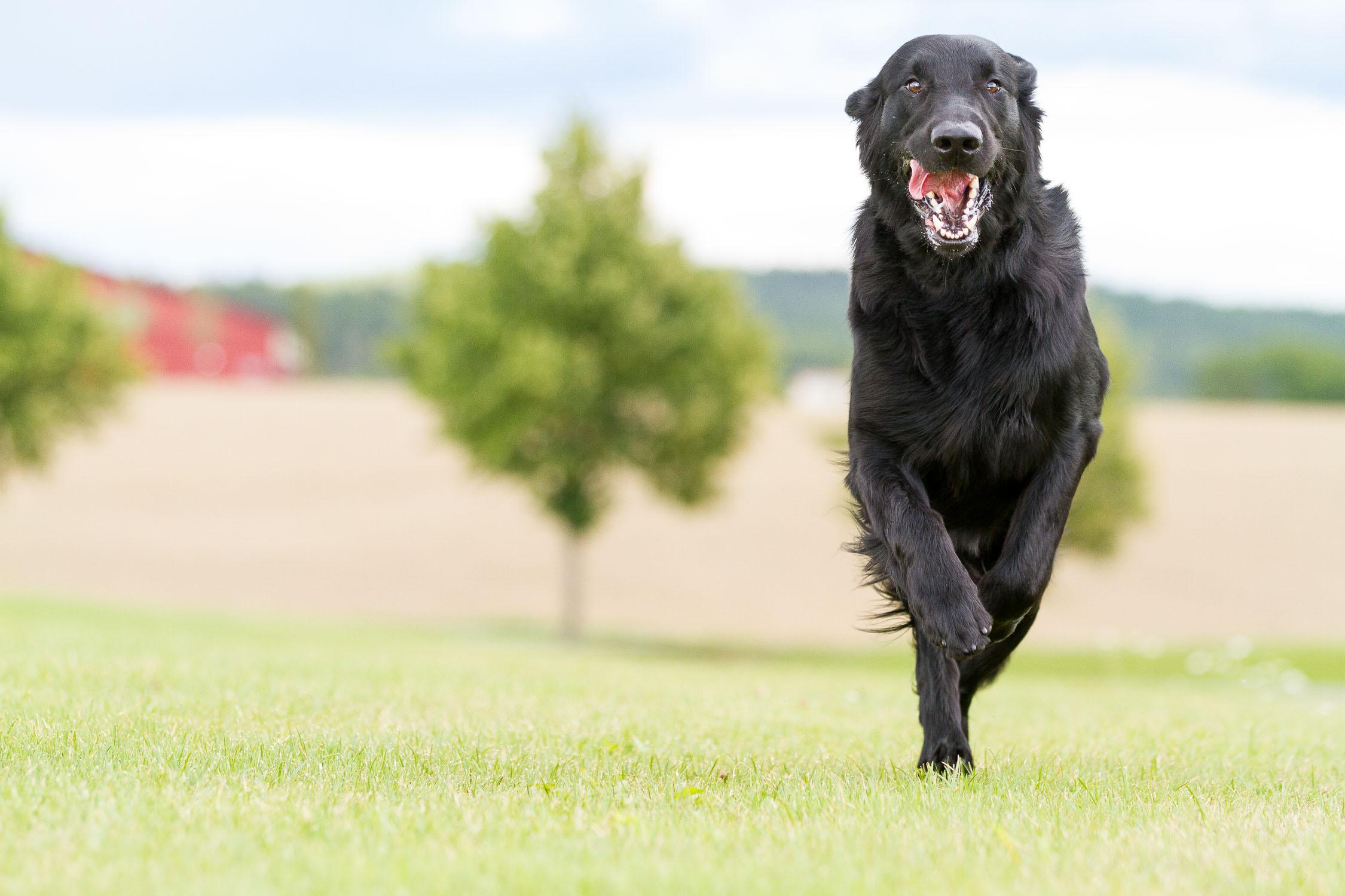 hundefotograf-hundefotografering-fotograf-sarpsborg-6