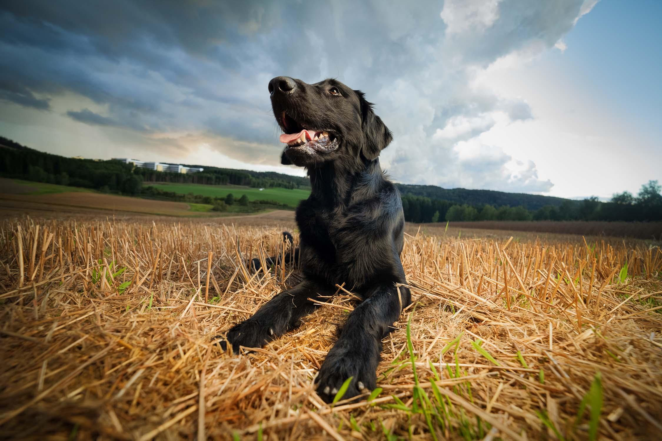 hundefotograf-hundefotografering-fotograf-sarpsborg-5
