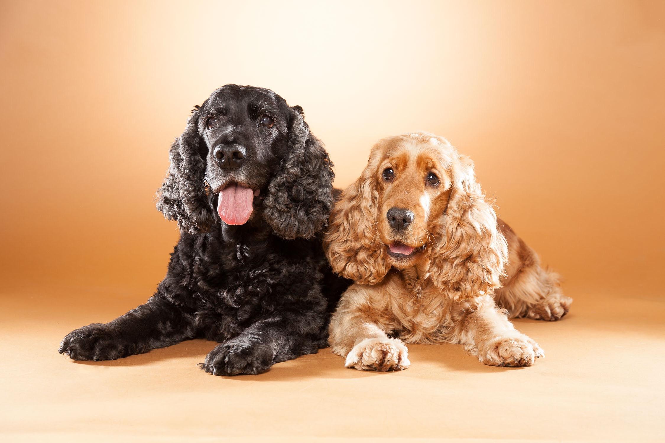 hund-hundefotograf-hundefotografering-fotograf-hodnedesign-pål-hodne--3.jpg