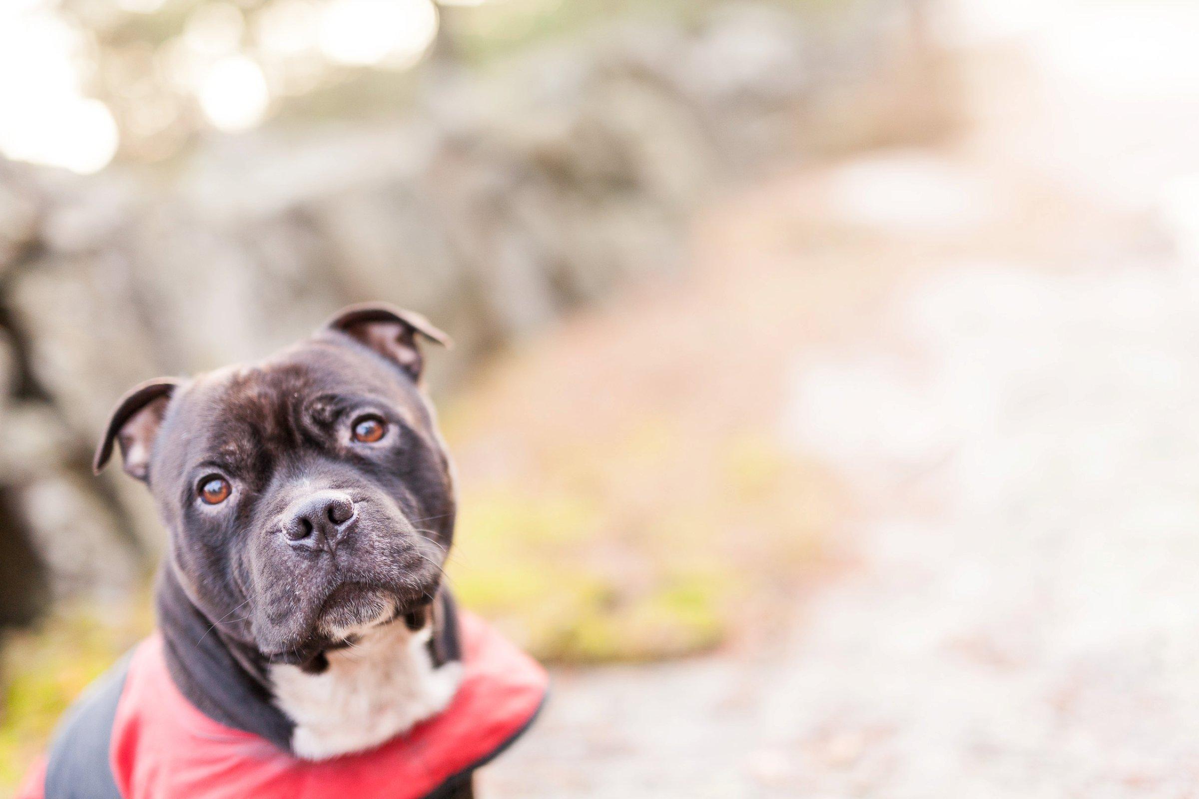 En av årets mange koselige turer i skog og mark med hundene