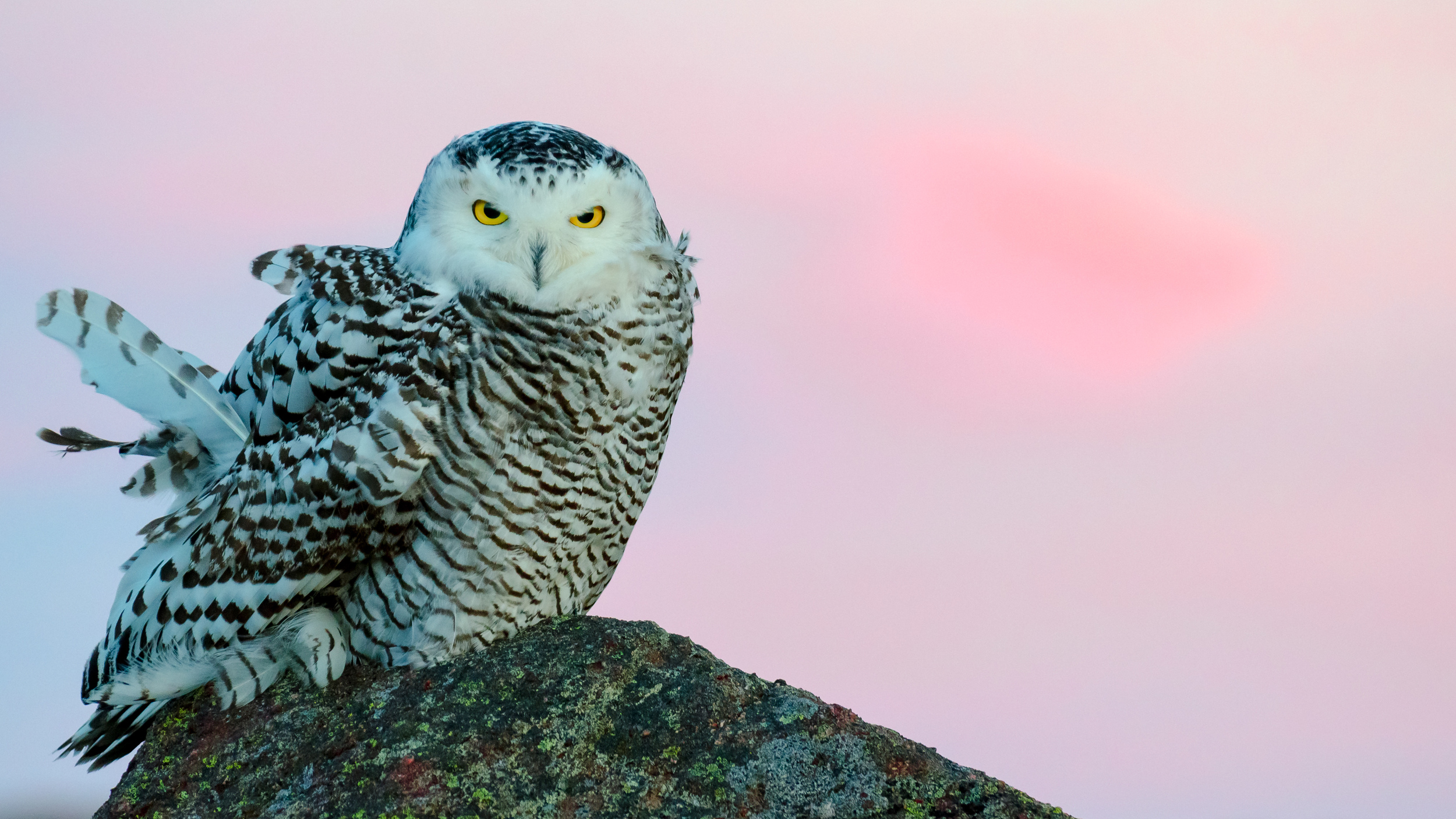Getting out to Cape Spear for sunrise is worth it on most days. That day it was particularly.