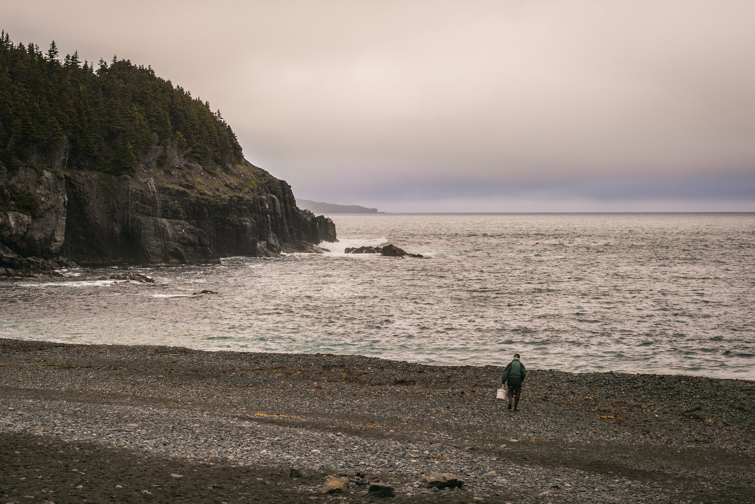 A lone skipper looking for capelin.