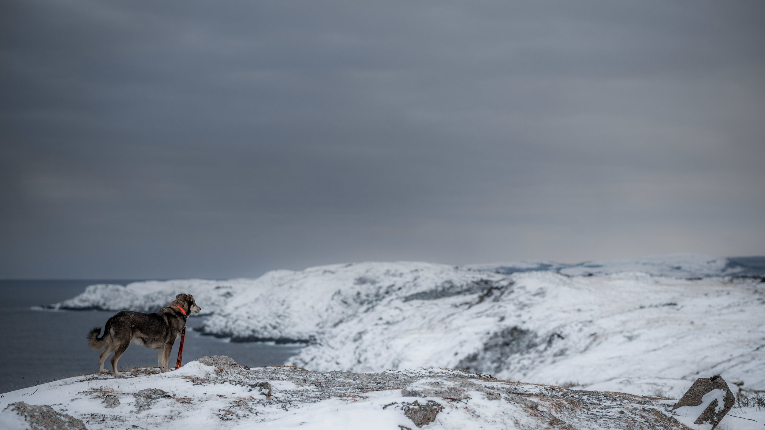 Jan 2 - Cape Spear-12.jpg