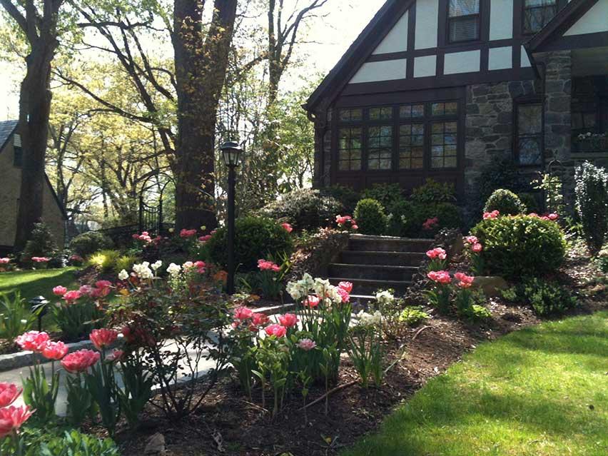 tulips-front-walk.jpg