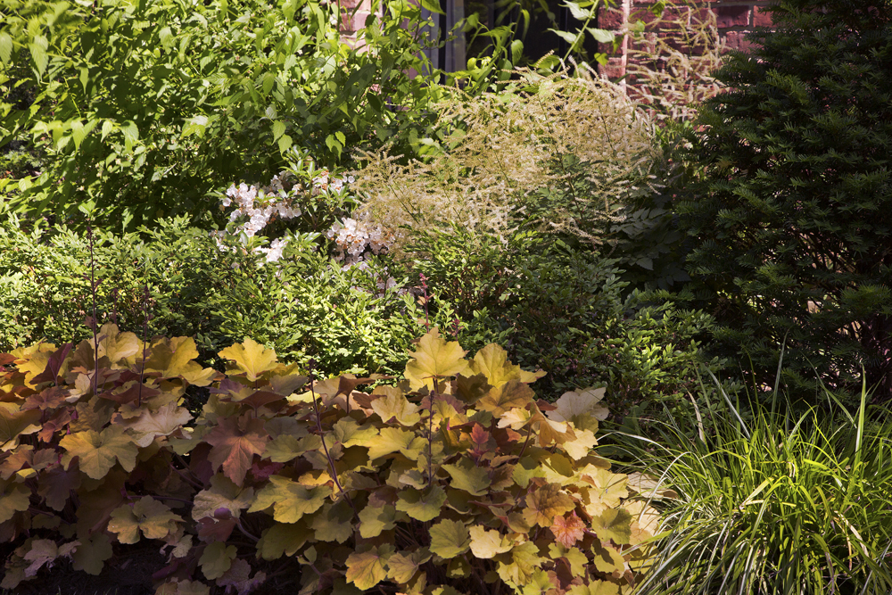 6-brick-boxwood-garden-year5.jpg