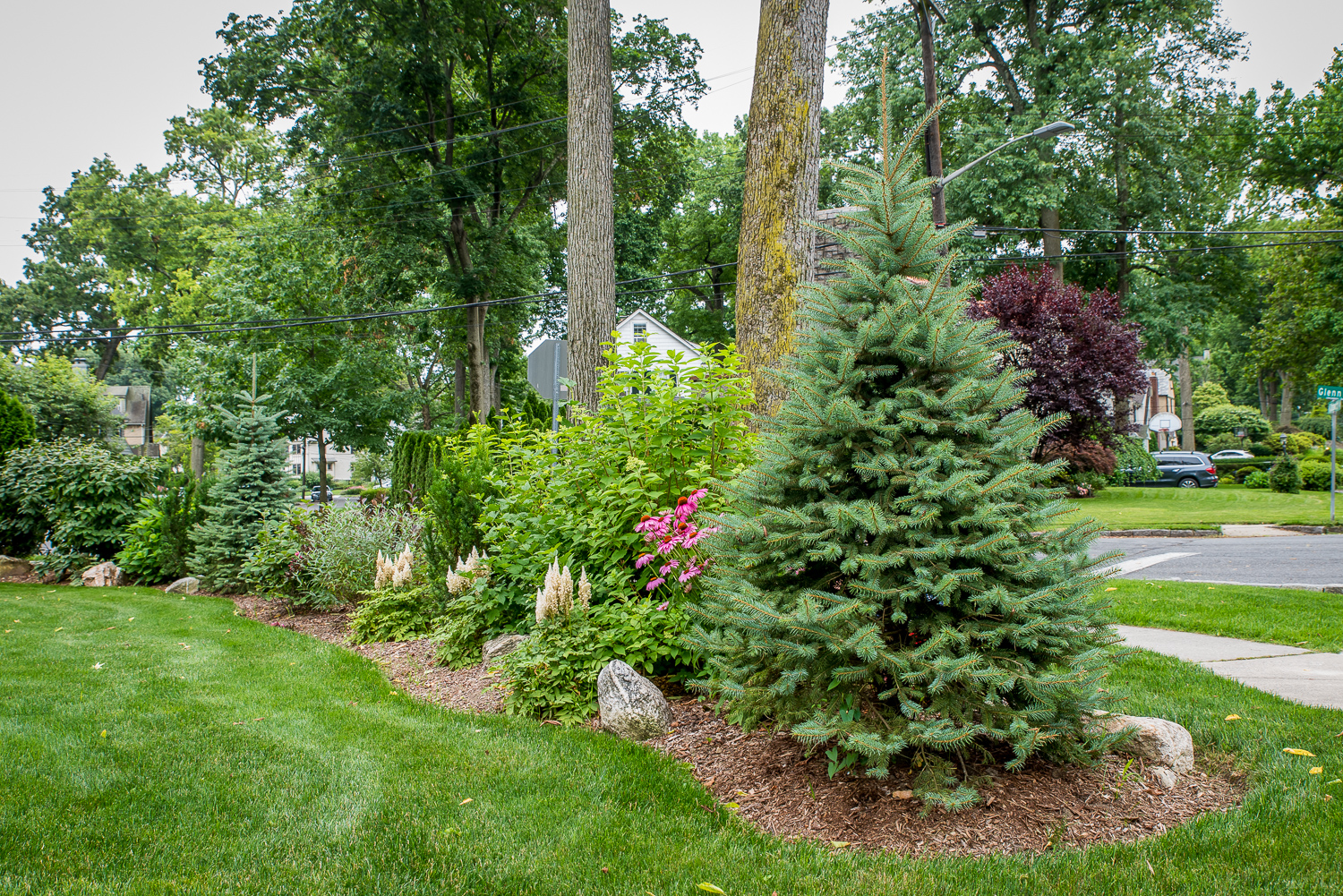 4-Mixed-evergreens-for-privacy.jpg