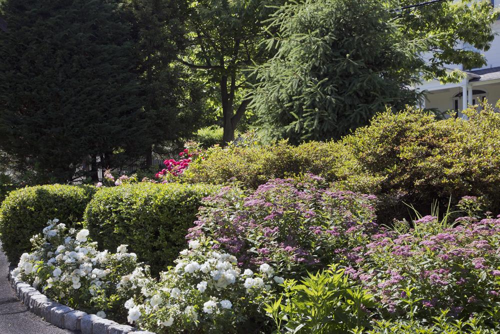 3a-Victorian-perennial-rose-garden.jpg